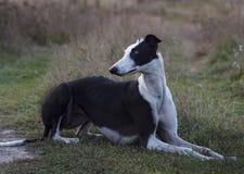 el perro está mintiendo en la hierba Foto de archivo libre de regalías