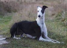 el perro está mintiendo en la hierba fotos de archivo