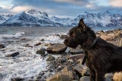El perro está mirando el mar, montañas en fondo fotos de archivo