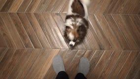 El perro está mirando para arriba el tizón del anfitrión almacen de metraje de vídeo