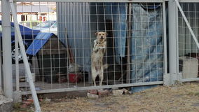 El perro está raspando detrás de una cerca metrajes