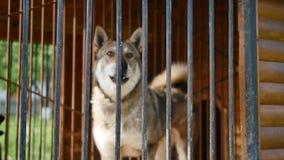 El perro está raspando en la jaula metrajes