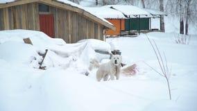 El perro está raspando en un Vilage ruso en invierno metrajes