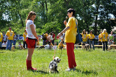 El perro feliz Imagen de archivo libre de regalías