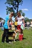 El perro feliz Fotografía de archivo libre de regalías