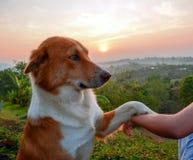 El perro feliz con la lengua hacia fuera y la inclinación de la cabeza, persigue la mano feliz y del perro imágenes de archivo libres de regalías