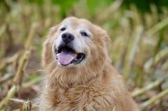 El perro feliz en verano es tan leal con su amor fotografía de archivo