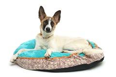 el perro feliz está descansando el fondo blanco Fotos de archivo libres de regalías