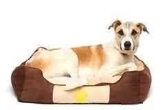 el perro feliz está descansando el fondo blanco Imágenes de archivo libres de regalías