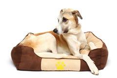 el perro feliz está descansando el fondo blanco Imagen de archivo