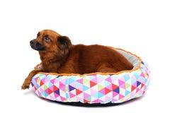 el perro feliz está descansando el fondo blanco Imagen de archivo libre de regalías