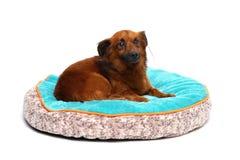 el perro feliz está descansando el fondo blanco Fotografía de archivo libre de regalías