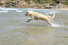 El perro feliz salta en el mar Foto de archivo libre de regalías