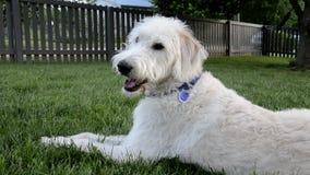 El perro feliz todavía se sienta en yarda