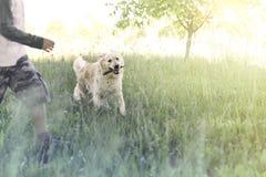 El perro feliz trae el palillo a su dueño joven fotografía de archivo