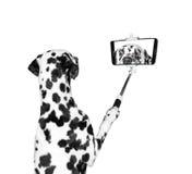 El perro fotografió el selfie en el teléfono Fotografía de archivo libre de regalías