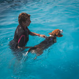 El perro goza de la piscina en Quattrozampeinfiera en Milán, Italia Fotografía de archivo libre de regalías