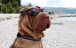 El perro goza de la playa Imagen de archivo libre de regalías
