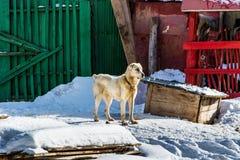 El perro grande Fotos de archivo