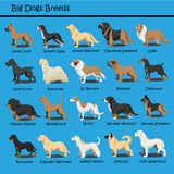 El perro grande cría el perro de perrito lindo del vector del diseño de la historieta del perro que las historietas diseñan stock de ilustración