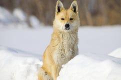 El perro guardián en nieve Imágenes de archivo libres de regalías
