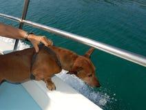 El perro hace un viaje del barco Imagen de archivo libre de regalías