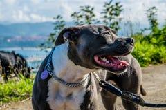 El perro hermoso fotografía de archivo
