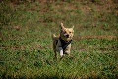 El perro juega libremente en el parque fotos de archivo libres de regalías