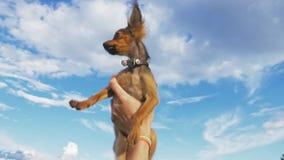 El perro lanza para arriba en el cielo almacen de video