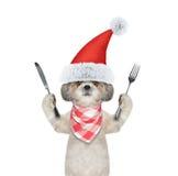 El perro lindo de santa quiere comer y sostener el cuchillo y la bifurcación imágenes de archivo libres de regalías
