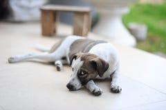 el perro lindo del pequeño bebé se sienta en piso Foto de archivo libre de regalías