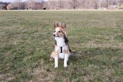 El perro lindo espera comandos Foto de archivo