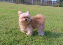 El perro lindo goza de ventoso Imagen de archivo libre de regalías