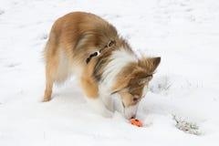 El perro lindo juega con una bola en la nieve Fotos de archivo
