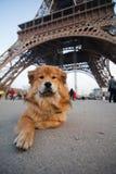 El perro lindo miente delante de la torre Eiffel Fotos de archivo libres de regalías
