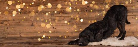 El perro mezclado negro de la raza se coloca en dos piernas en fondo de madera fotos de archivo