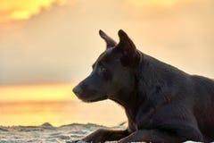 El perro miente en la playa en la puesta del sol Fotos de archivo