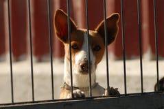 El perro mira detrás de la cerca del metal Imagenes de archivo