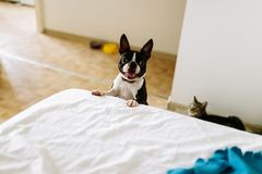 El perro mira hacia fuera fotos de archivo libres de regalías