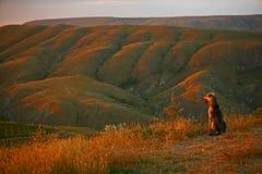 El perro mira la puesta del sol Imagenes de archivo