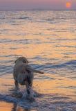 El perro mira puesta del sol Fotos de archivo
