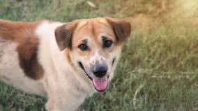 El perro moreno hizo un gesto con cientos sonrisas en la cara foto de archivo