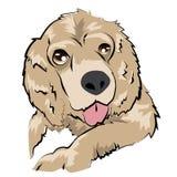 El perro mullido lindo escupe hacia fuera la lengua Foto de archivo
