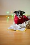 el perro Negro-blanco con gafas y en un traje del reno puso las patas en el libro abierto Fotografía de archivo libre de regalías