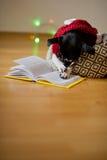 el perro Negro-blanco con gafas y en un traje del reno puso las patas en el libro abierto Fotos de archivo