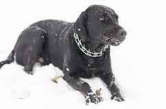 El perro negro que juega en el campo de nieve Imagen de archivo