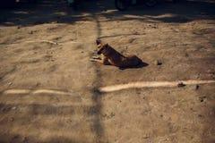El perro negro se relaja en la arena fotografía de archivo