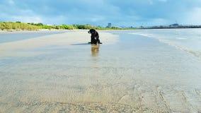 El perro negro se sienta solamente en la playa Fotos de archivo libres de regalías