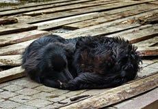 El perro negro triste está poniendo encendido al aire libre Imagenes de archivo