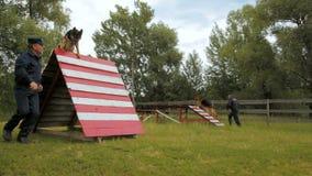 El perro pastor del servicio sube para arriba en funcionamientos de la pared abajo bajo supervisión del coche almacen de metraje de vídeo